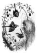 Birds Family : Mérion (Malurus Cyaneus)