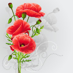 Red poppies on a gray background