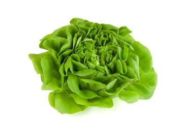 knackiger salatkopf