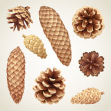 Collection of pinecones and fir cones, eps8 vector illustration