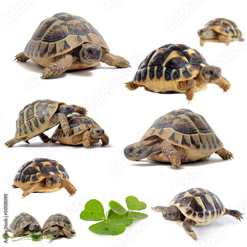 group of Tortoises
