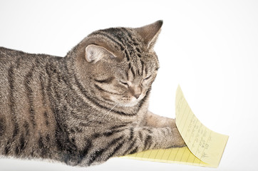 cat with notepad