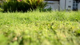 meadow grass closeup grass lawn cutter mower worker pass shadow