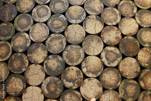Floor made of wooden logs