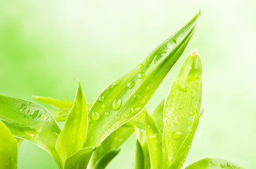 Fresh Bamboo with drops on colorful background