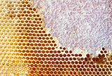 Beer honey in honeycombs