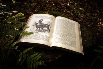 Historisches Buch im Wald