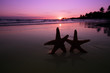 sea star starfish Silhouette on sunrise beach,  shallow dof