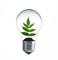 Zweig wächst in einer Glühbirne