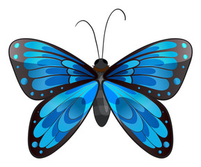 A beautiful blue butterfly