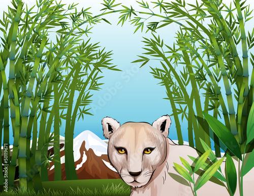 Fototapeten,zeichnung,abbild,grafik,tiger