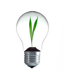 Grashalm wächst in einer Glühbirne