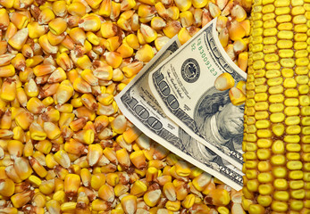 Dollar bills and corn beans background