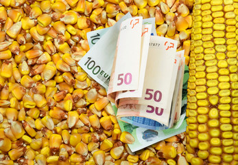 Euro banknote and corn beans background