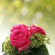 rosen in pink und frühlingsbokeh