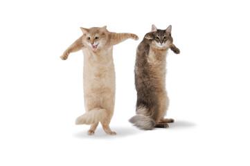 01-dance cat