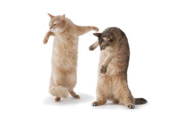 02-dance cat