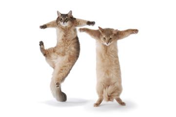 03-dance cat