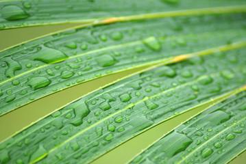 feuille de palmier 1
