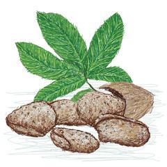 tahitian chestnut