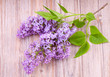 Branch of  lilac flowers on wooden  surface