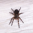 Top view of tarantula spider