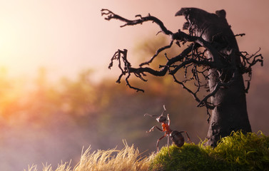 meeting sunrise with old stump, ant tales