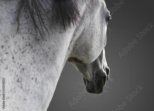 weißes Pferd portrait