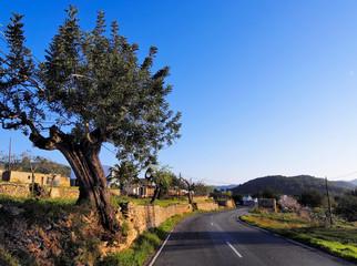 Ibiza Road, Balearic Islands, Spain