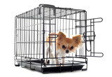 chihuahua in kennel poster