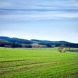 Winter wheat fields in the spring.