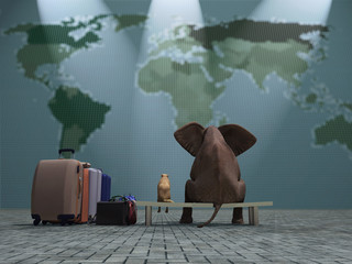 dog and elephant travel the world