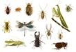 canvas print picture - Insekten
