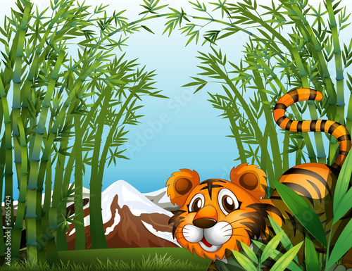 A bamboo forest with a tiger