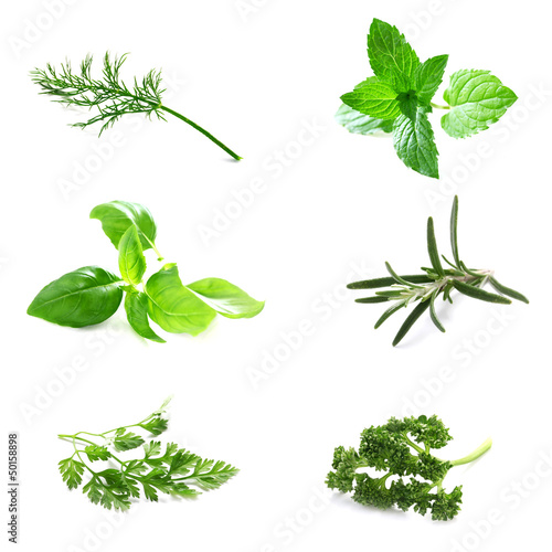 Set of Fresh Herbs