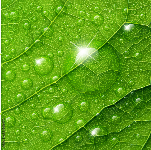 wektor-woda-opuszcza-na-zielonym-liscia-makro-tle