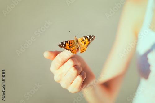 Beautiful butterfly - 50165885