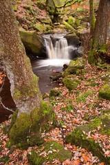 Autumn in Padley Gorge in Peak District