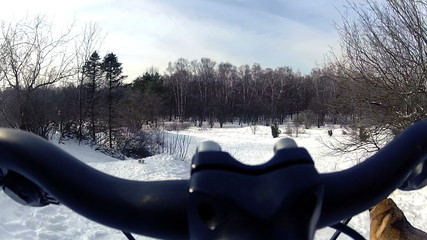 Riding a bicycle in the park with the dogs at winter. HD