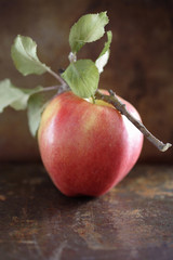 Red apple and twig