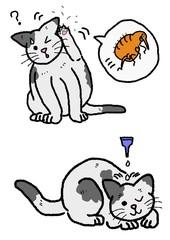 猫のノミの駆除