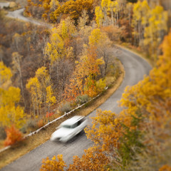Car driving along road through autumn leaves