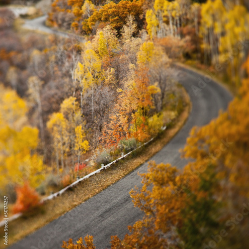 Autumn leaves along remote road