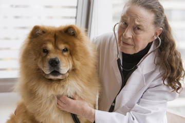 Chilean veterinarian giving dog a checkup