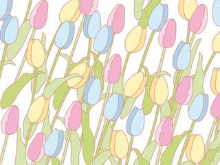 チューリップの花枠&壁紙
