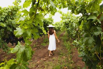 Hispanic woman walking in vineyard