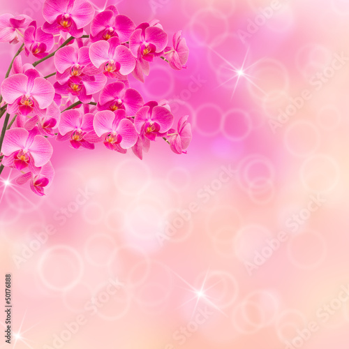 pink orchid branches
