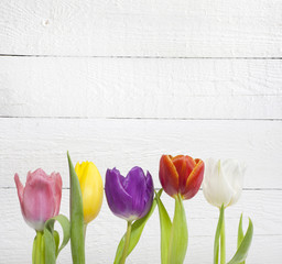 Spring easter colorful tulips on white vintage background planks