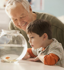 Caucasian grandfather and grandson watching goldfish