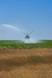 Sprinkler watering crops in field